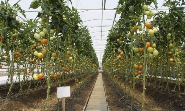 There are many advantages of indoor growing and cultivation