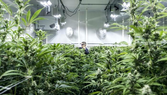 build marijuana grow roomss